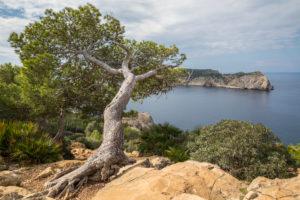 Blick von der Westküste zur Insel Sa Dragonera (die Dracheninsel), Nähe Sant Elm, Mallorca, Balearen, Spanien