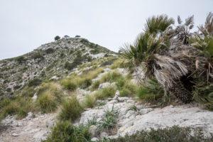 Blick zum Gipfel des Talaia d'Alcúdia, Wanderung auf der Halbinsel Alcudia, Mallorca, Balearen, Spanien