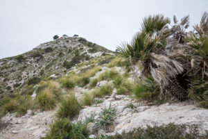View to the summit of the Talaia d'Alcúdia, hike on the peninsula Alcudia, Mallorca, Balearic Islands, Spain