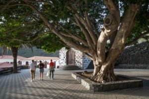 Village square with huge deciduous tree at the Ermita de la Inmaculada Concepcion church in the mountain village of Masca, Tenerife, Canary Islands, Spain
