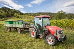 Traktor mit Anhänger mit geernteten Weintrauben im Weinbaugebiet zwischen Gumpoldskirchen und Pfaffstätten, Niederösterreich, Österreich