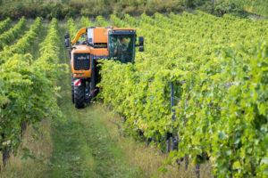 Traubenvollernter bei der Traubenlese im Weinbaugebiet zwischen Gumpoldskirchen und Pfaffstätten, Niederösterreich, Österreich