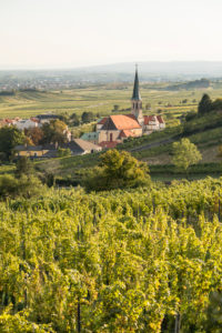 View over vineyard to Gumpoldskirchen with the parish church St. Michael and into the Vienna Basin, Gumpoldskirchen, Lower Austria, Austria
