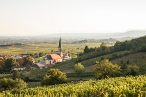Blick über Weingarten auf Gumpoldskirchen mit der Pfarrkirche St. Michael und ins Wiener Becken, Gumpoldskirchen, Niederösterreich, Österreich