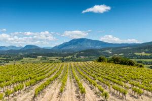 Roaix, Vaucluse, Provence, Provence-Alpes-Côte d'Azur, France, vineyards near Roaix, Arondissement Carpentras, Mont Ventoux in the background,