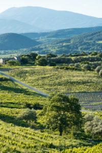 Roaix, Vaucluse, Provence, Provence-Alpes-Côte d'Azur, France, vineyards near Roaix, Arondissement Carpentras,