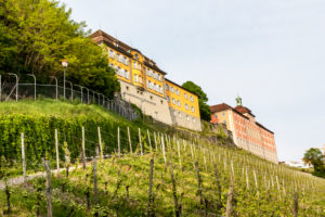 Meersburg, Baden-Wuerttemberg, Lake Constance, Germany, the state vineyard Meersburg