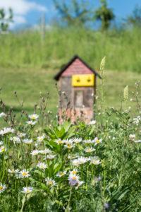 Wildwiese mit Insektenhotel im Hintergrund