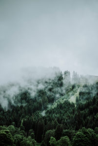 Ascending clouds from a forest in the mountains