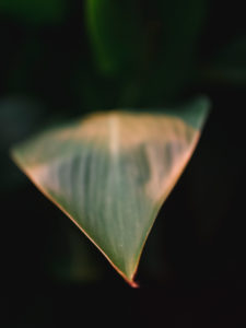 Plant leaf in the evening light with dark background