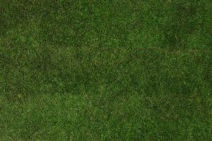 Meadow, lawn,