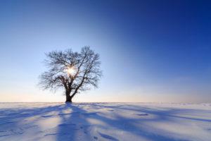 Tree in the change of the seasons, winters, sun, heaven, field, scenery, Germany, Bavaria, Allgäu, Mauerstetten, back light, silhouette