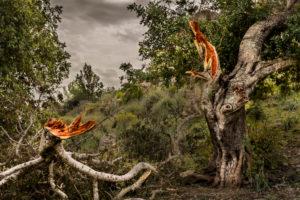 Olive Tree, cracked branch, Spain, Mallorca, Balearic Islands, landscape, nature, vegetation, spring, Olive Tree, Tree, Branch, broken, color