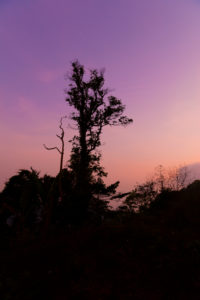 Tropical rainforest on the Gulung Raja, the highest mountain on Lankawi, Malaysia, break of dawn, morning, early, sunrise