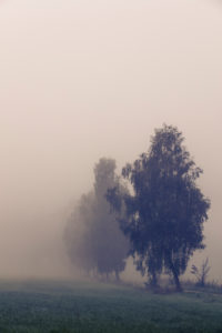 Scenery in the fog, Germany, Bavaria, colorless, empty, alone, lonely