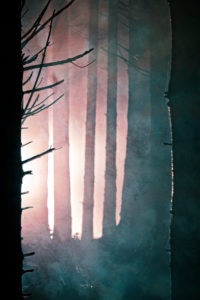 Winter forest illuminated with headlights at night, Germany, Bavaria, Allgaeu, Irsee, forest, coniferous forest, spruce, tree