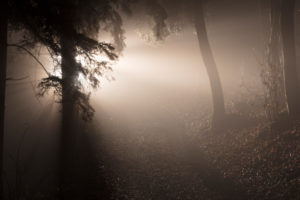 Winter forest by night, illuminated with spotlight, Germany, Bavaria, Allgäu, Irsee, forest, coniferous forest, spruce, tree