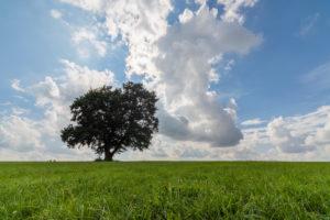 Tree through the seasons: summer