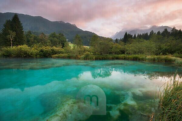 Zelenci, source of the Sava Dolinka, Slovenia, Europe