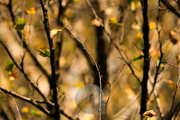 Fall, fall leaves