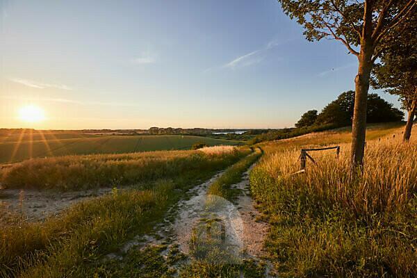 Germany, Mecklenburg-West Pomerania, landscape, dirt road, evening