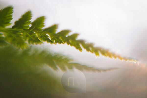 Fern, detail, leaf, blur