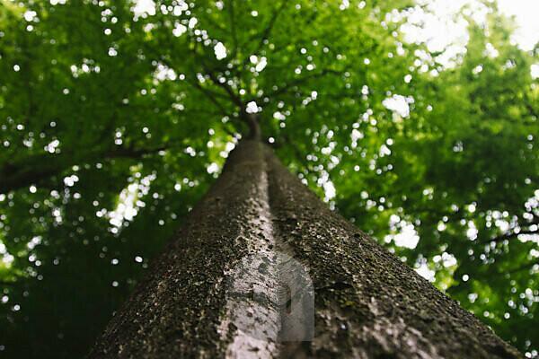 Wald, Bäume, von unten