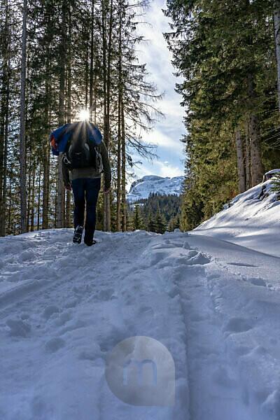 Europe, Austria, Berchtesgaden Alps, Salzburg, Werfen, Ostpreussenhütte, mountain hikers on a snowy forest path in the light mountain forest