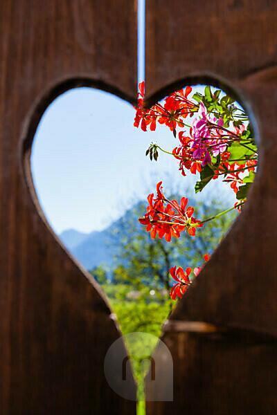 Heart, balcony, geranium, landscape, wood