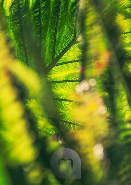 Plant, colocasia, detail, blur