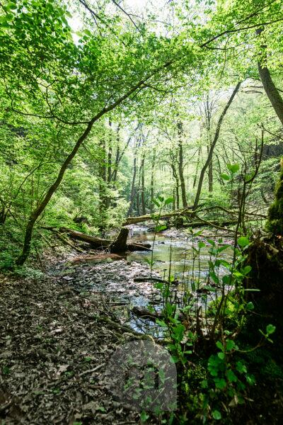 The Ehrbach winds through the forest