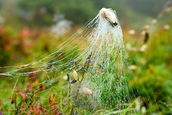 Austria, Montafon, spider web with dew drops