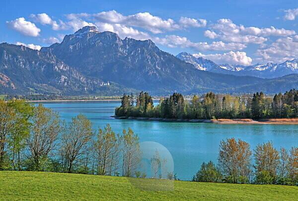 Frühlingslandschaft am Forggensee gegen Säuling ( 2047m ) der Ammergauer Alpen, Halblech, Romantische Strasse, Ostallgäu, Allgäu, Schwaben, Bayern, Deutschland