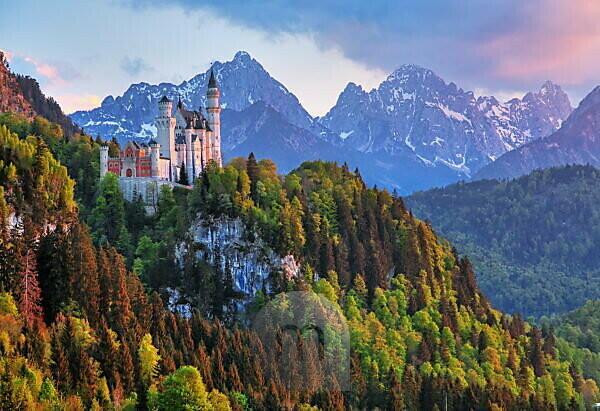 Frühlingslandschaft mit Schloss Neuschwanstein gegen Tannheimer Berge, Hohenschwangau, Romantische Strasse, Ostallgäu, Allgäu, Schwaben, Bayern, Deutschland