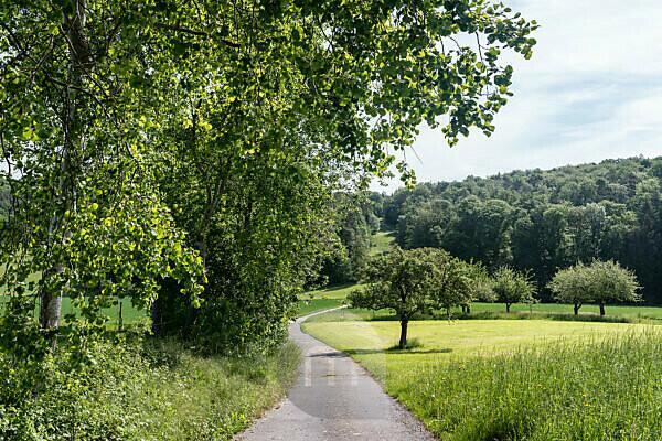 Lützelbach, Breitenbrunn, Hessen, Germany. Field landscape in Odenwald.