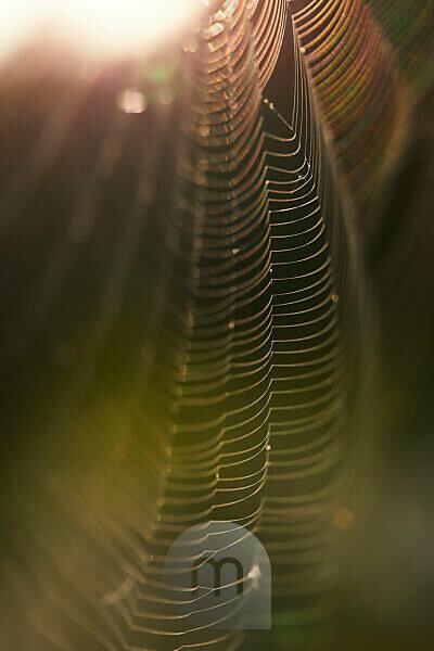 Spider web, back light, detail
