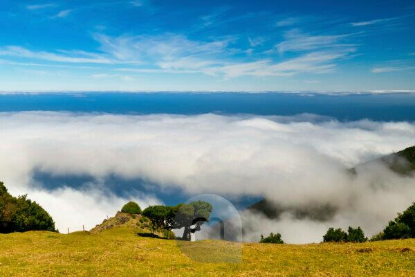 Hike in the Fanal area to the laurel forest, Unesco World Heritage, Madeira,