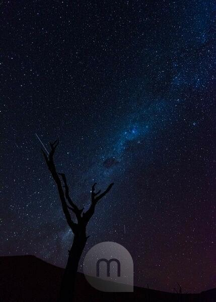 Deadvlei in Namibia: Milky Way, in the foreground a dead camel thorn tree. Long exposure