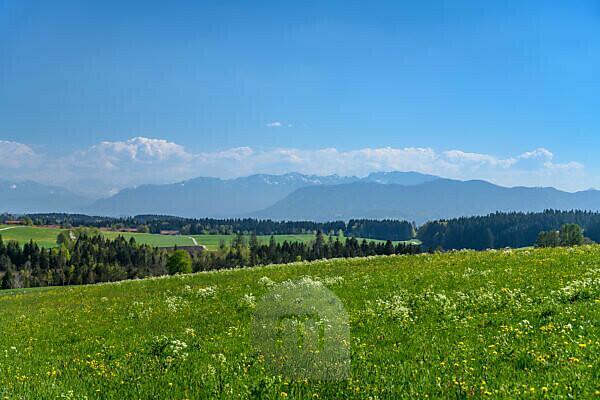 Germany, Bavaria, Upper Bavaria, Tölzer Land, Dietramszell, Großeglsee district, spring landscape against pre-Alps