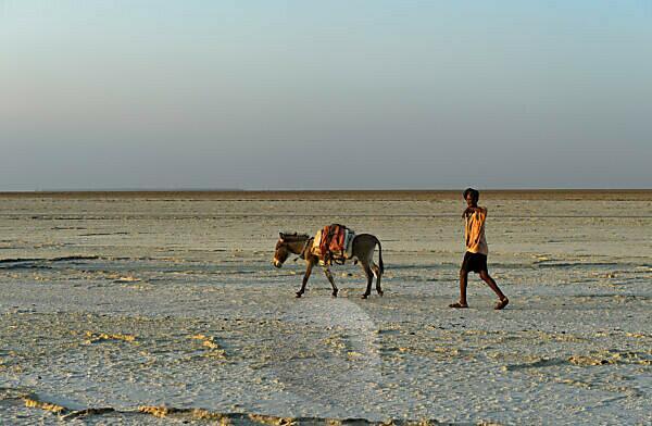 Shepherd with donkey on the dry Assale Salt Lake, Danakil Valley, Afar Region, Ethiopia