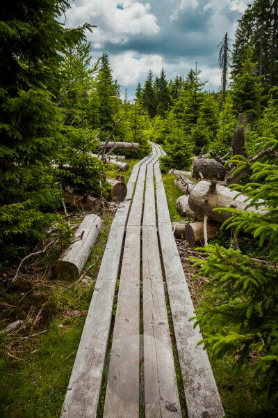 Europe, Germany, Bavaria, Bavarian Forest, National Park, hiking trail made of wo wooden planks