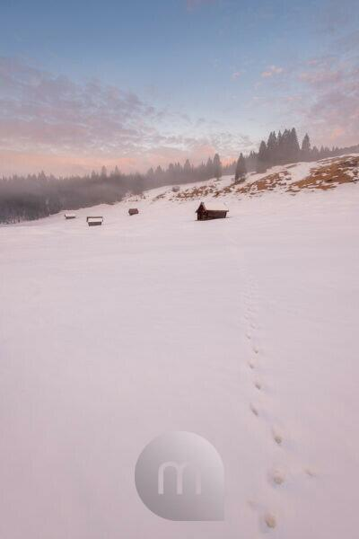 Fox tracks in the snow, in the background typical alpine haystacks and hilly landscape of the Bavarian Prealps and the Ester Mountains near Garmisch-Partenkirchen.