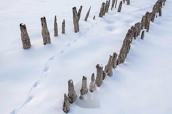 Holzbohlen einer alten Fischzucht auf der Halbinsel Zwergern am Walchensee mit Fuchsspur im Schnee
