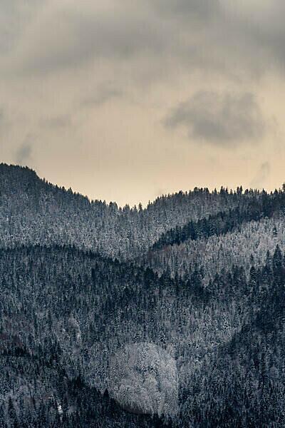 Schnee bedeckte Hügel / Berge am Fuße des Herzogstand im Estergebirge am Walchensee, mit dichtem Wald