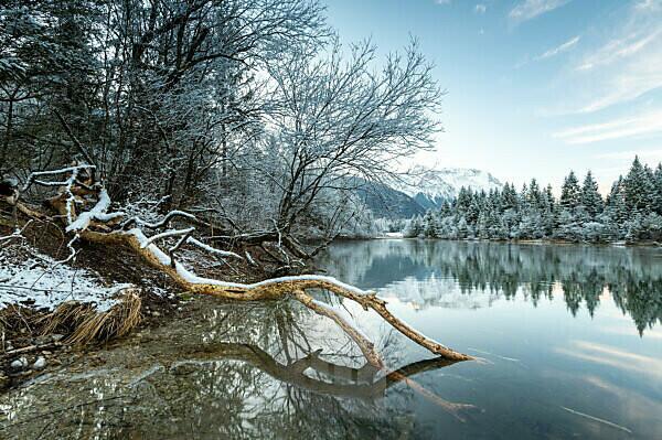 Biberspur an einem Baumstamm am Stausee Krün bei Schnee und blauem Himmel.
