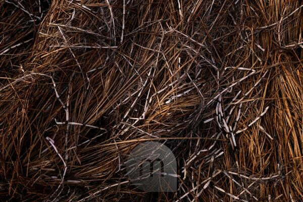 Dried reeds and grasses in early spring on the banks of a small moor lake form bizarre patterns and structures.