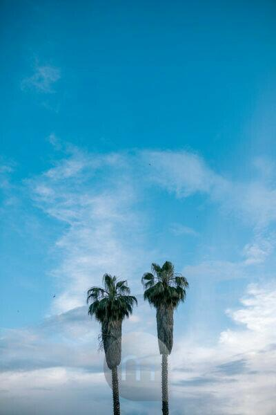 Spain, Two palm trees standing against blue sky