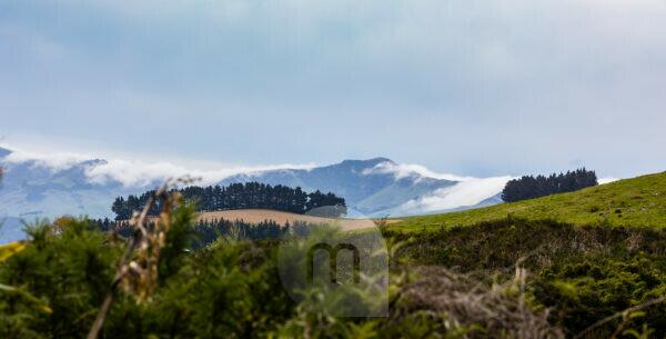 Hilly landscape with clouds and fir trees in Akaroa