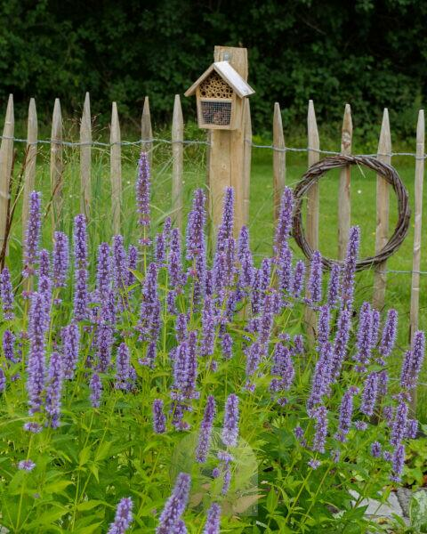 Small insect hotel made of bamboo tubes and cones, on a fence, bee pasture in front