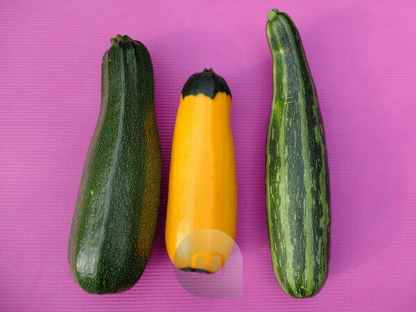 """Zucchini varieties - striped: """"Coucouzelle"""", two-tone yellow-green: """"Zephyr"""", speckled: """"Defender"""""""